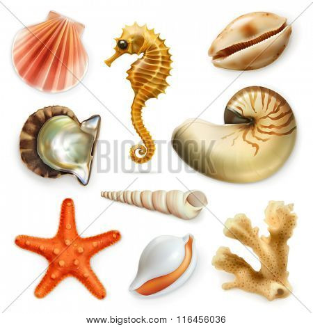 Seashells, vector icon set