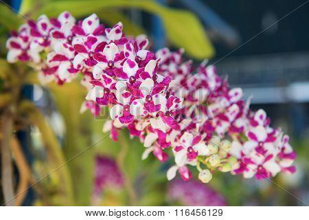 Beautiful orchids flower tree.