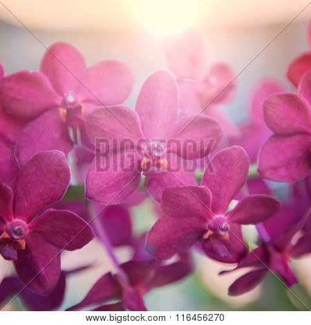 Beautiful orchids flower tree with sunrise.