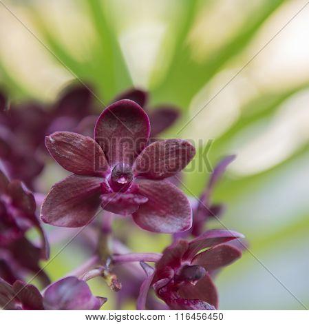 Beautiful purple orchids flower tree.