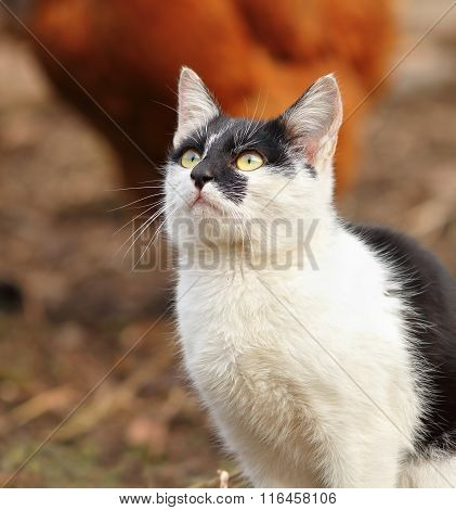 Curious Kitten Portrait