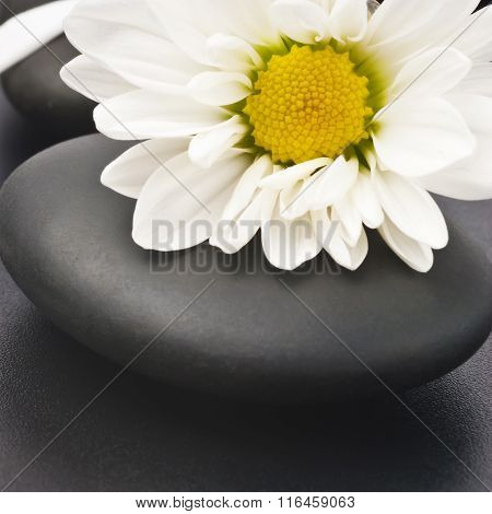 Spa still life with white flowers