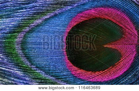 background of bright peacock feather