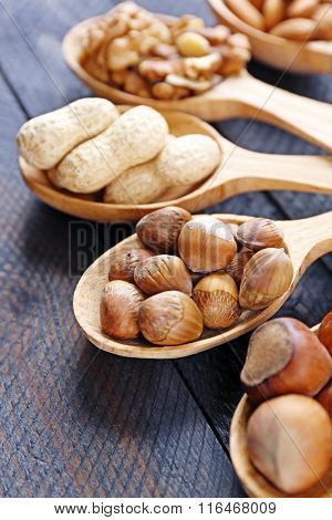 Spoons with hazelnuts, walnuts, almonds, acorns and peanuts, close-up