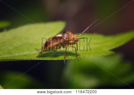 Brown Bug Sitting On The Green Leaf
