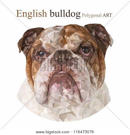 English Bulldog. Polygonal Drawing..
