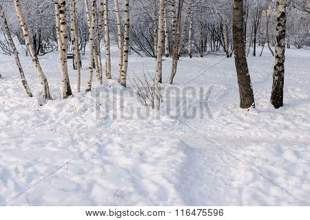Winter Glade With Snowdrifts And A Footpath In The Wood