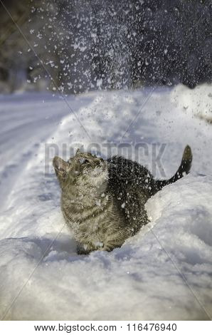 Cat in the snow is on the snowdrift