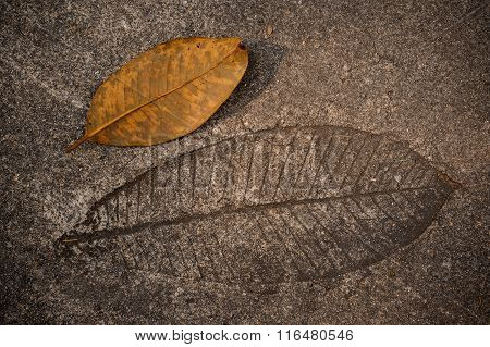 Leaf Imprint On Cement Texture Background