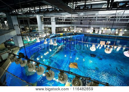Aquarium water tank