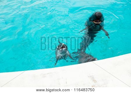 Dolphin and whale shark