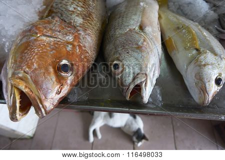 fish market at rural area