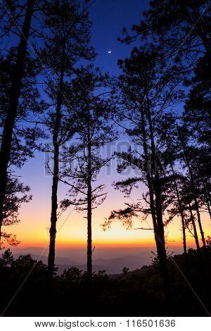 Twilight Sky With Silhouette Pine Tree