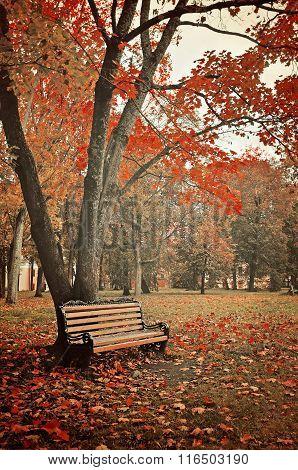 Autumn Picturesque Landscape In Colorful Tones