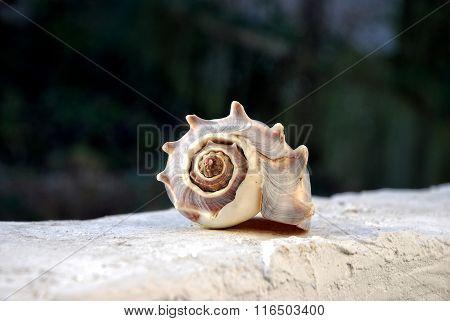 Muschel auf weißer Mauer