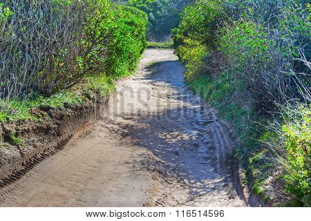 Dirt Path In The Countryside