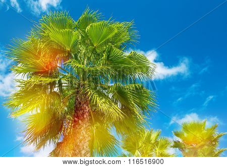 Palm Trees With Sunny Blue Sky. Summer Holidays Background