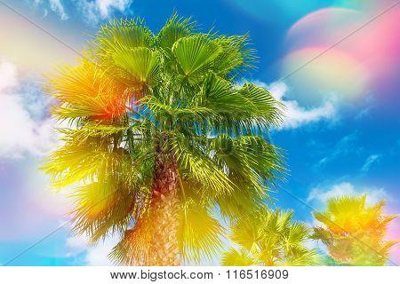 Green Palm Tree Against Beautiful Sunny Blue Sky. Summer Holidays