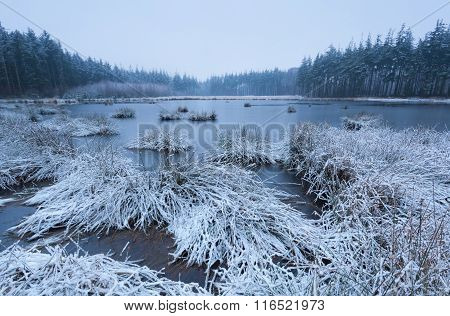 Forest Swamp In Winter