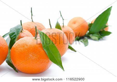 Fresh, Ripe Citrus, Isolated On White Background