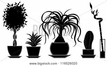 Set of vector plants in a pot