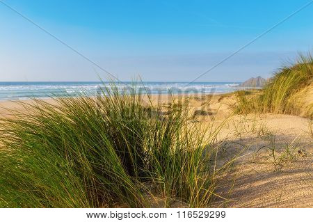 Grass on a background of blue sea. Romantic landscape.