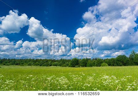 Vibrant Springtime Grass Lawn
