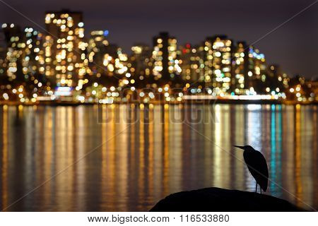 Urban Heron Night