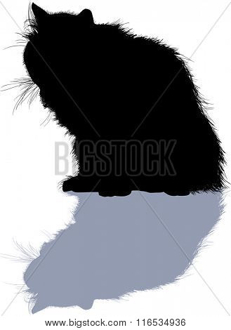 illustration with furry cat isolated on white background