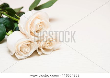 White Roses On A Light Wooden Background. Women' S Day, Valentines Day, Mothers Day