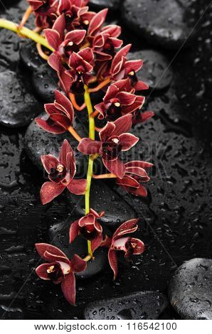Red branch orchid with therapy stones