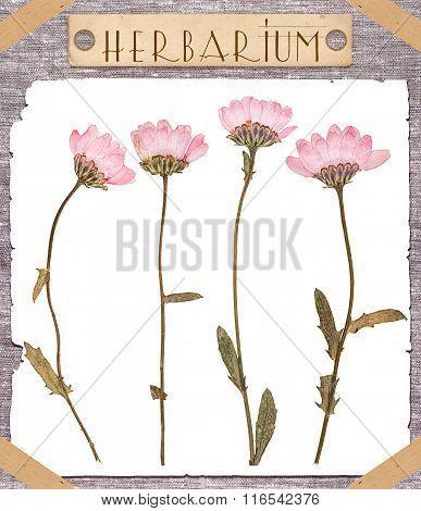 Herbarium Pressed Pink Flowers