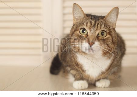 Cat Lying On Wooden Background