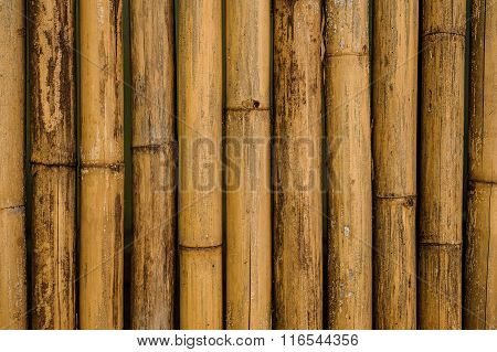 Dry Yellow Bamboo Fence Background
