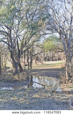 Brushy Creek Regional Trail