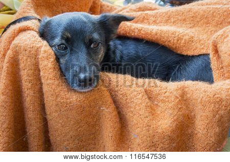 Contented Dog Laying On A Blanket
