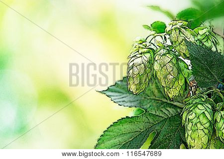 Illustration Of Hop Cones