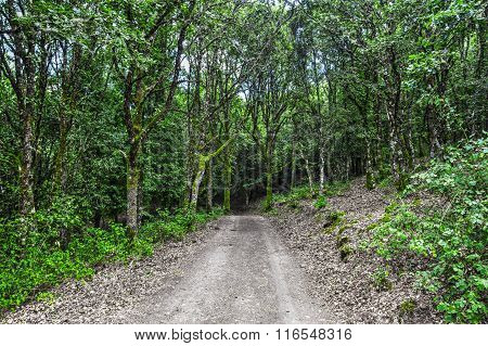 Green Plants And Trees Around A Dirt Path In The Forest