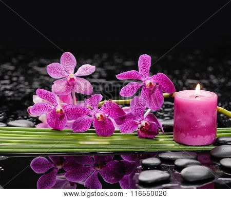 bamboo grove with orchid ,candle on wet background