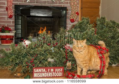 Cat Destroys Christmas