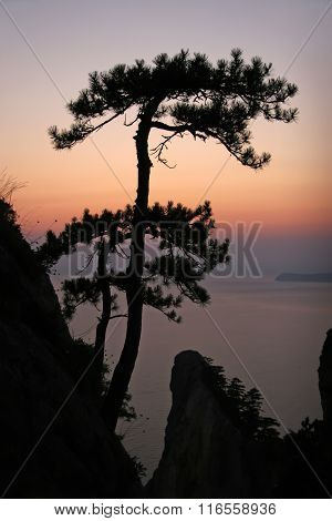 Pine Tree Growing On A Cliff Above The Abyss. Tree On A Hillside Above The Sea.