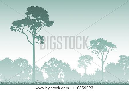 A Misty Forest Landscape with Trees in Silhouette