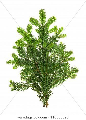 Branch Of Christmas Tree Isolated On White Background. Pine Sprig