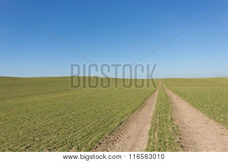 Tire Tracks In Green Field With Clear Blue Sky Background