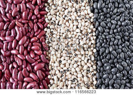 Beans Varieties