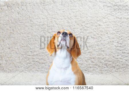 Dog On The Carpet
