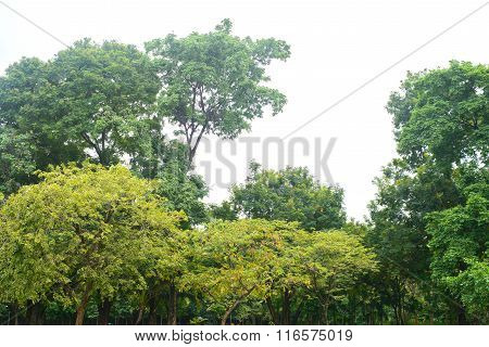 Beautiful Green Tree On White Background In High Definition