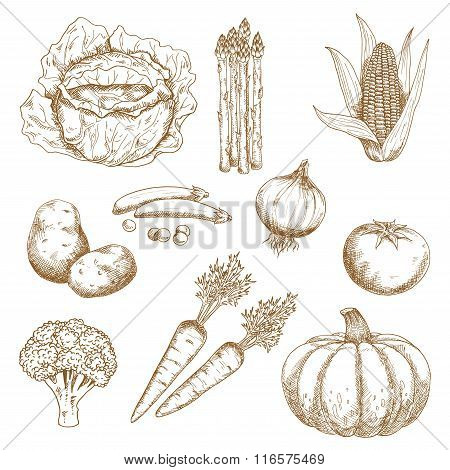 Hand drawn sketches of vegetables