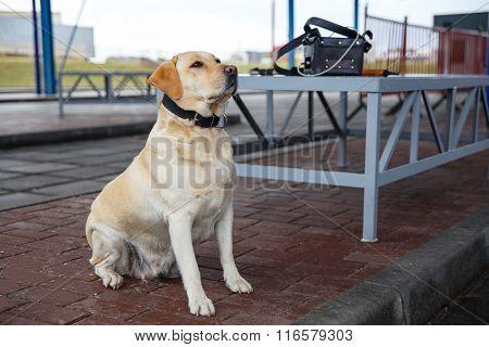 The Customs Dog