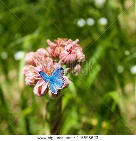 Blue Butterfly On A Flower.